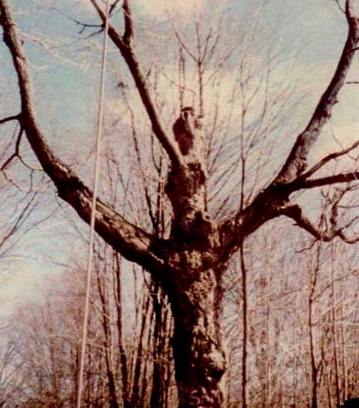 Jesus tree brewster ny
